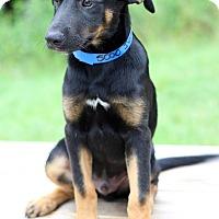 Adopt A Pet :: Ivan - Waldorf, MD