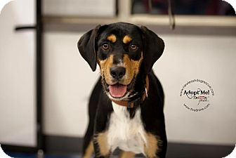 Hound (Unknown Type) Mix Dog for adoption in La Crosse, Wisconsin - Mayzee