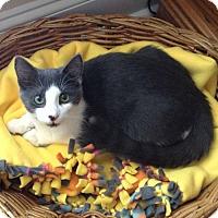 Adopt A Pet :: Bruno - McCormick, SC