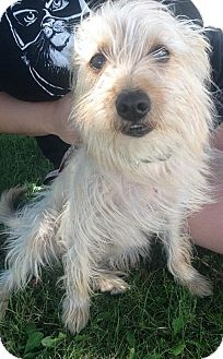 Terrier (Unknown Type, Medium) Mix Dog for adoption in Georgetown, Kentucky - Blondie