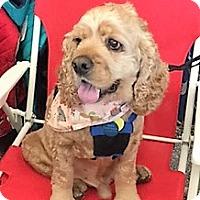 Adopt A Pet :: Robbie - Sacramento, CA