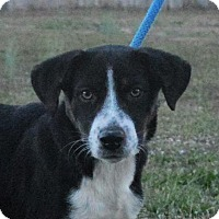 Adopt A Pet :: **QUENTIN** MEET DEC 17TH! - Mukwonago, WI