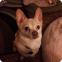 Adopt A Pet :: Doppel - Cumberland, MD
