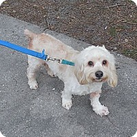 Adopt A Pet :: Charlie - Ormond Beach, FL