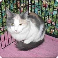 Adopt A Pet :: Robyn - Colmar, PA