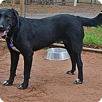 Adopt A Pet :: Big Buddy - Athens, GA