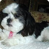 Adopt A Pet :: Isaac - Toronto, ON