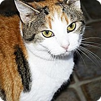 Adopt A Pet :: Piper - Xenia, OH