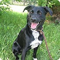 Adopt A Pet :: Ben - Egremont, AB