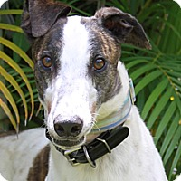 Adopt A Pet :: Turley - West Palm Beach, FL
