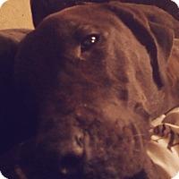 Adopt A Pet :: Biankah - Pflugerville, TX