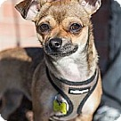 Adopt A Pet :: Cara