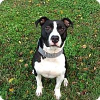 Adopt A Pet :: Bruiser - Lake Charles, LA