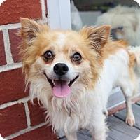 Adopt A Pet :: Squire - Smyrna, GA