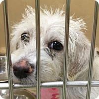 Adopt A Pet :: Trixie - Visalia, CA