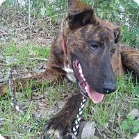 Adopt A Pet :: Scoobey - SAN ANTONIO, TX