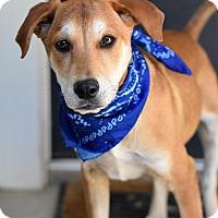 Adopt A Pet :: Jefferson - Baton Rouge, LA