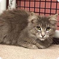 Adopt A Pet :: Serafina - Long Beach, CA