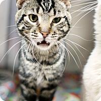 Adopt A Pet :: Renegade - Appleton, WI