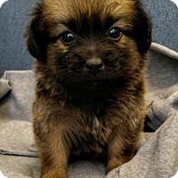 Adopt A Pet :: McBlanche - Fresno, CA
