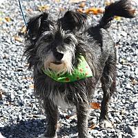 Adopt A Pet :: Tubbie - West Grove, PA
