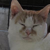 Adopt A Pet :: Timmy - Jackson, MO