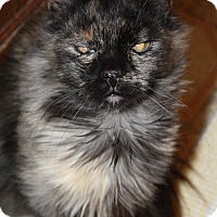 Adopt A Pet :: Kitts - Colorado Springs, CO