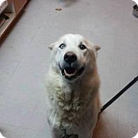Adopt A Pet :: Bailey - Cavan, ON