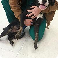 Adopt A Pet :: Finn - Sherman, CT