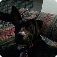 Adopt A Pet :: Maya - Orange Park, FL