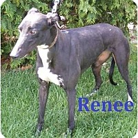Adopt A Pet :: Renee - Fremont, OH