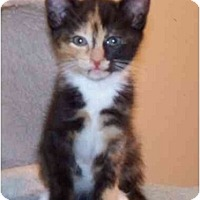 Adopt A Pet :: Tennessee - Alexandria, VA