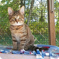 Adopt A Pet :: Alana - Dover, OH