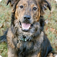 Adopt A Pet :: Tucker - Homewood, AL