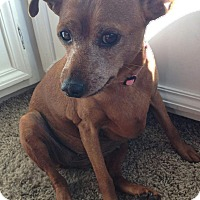 Adopt A Pet :: Jolene - Cedar Rapids, IA