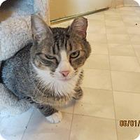 Adopt A Pet :: Dylan - Colmar, PA