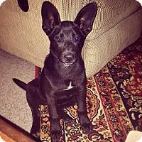 Adopt A Pet :: Minnie - Huntsville, AL
