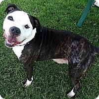 Adopt A Pet :: Kebo - Athens, GA