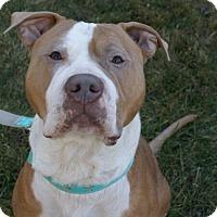 Adopt A Pet :: Humphrey - Framingham, MA