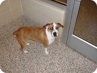 Cadence | Adopted Dog | Aiken, SC | Basset Hound/Jack ...