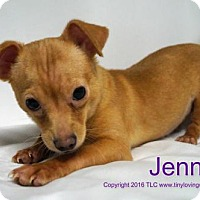 Adopt A Pet :: Jenna - Simi Valley, CA