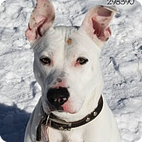 Adopt A Pet :: Fiona - Troy, MI