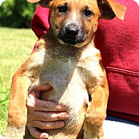 Adopt A Pet :: Jo-Lee~meet me~ - Glastonbury, CT