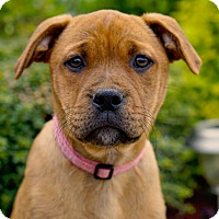 Adopt A Pet :: *Daffodil - PENDING - Westport, CT