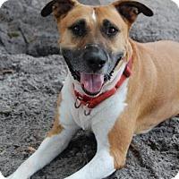 Adopt A Pet :: Franky - Bradenton, FL