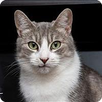 Adopt A Pet :: Lady Fair - Sherwood, OR