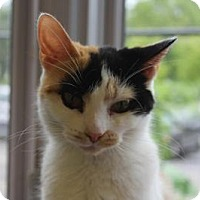 Adopt A Pet :: Jan - Indianapolis, IN