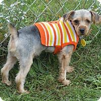Adopt A Pet :: Jigs - Prole, IA
