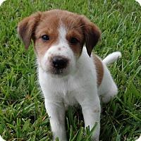 Adopt A Pet :: Cutie Pie (aka Tip) - Houston, TX