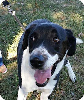 Border Collie/Labrador Retriever Mix Dog for adoption in LaGrange, Kentucky - Kayto